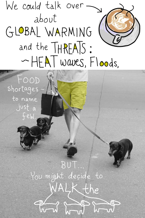 photo of 3 dogs being walked by Franke James