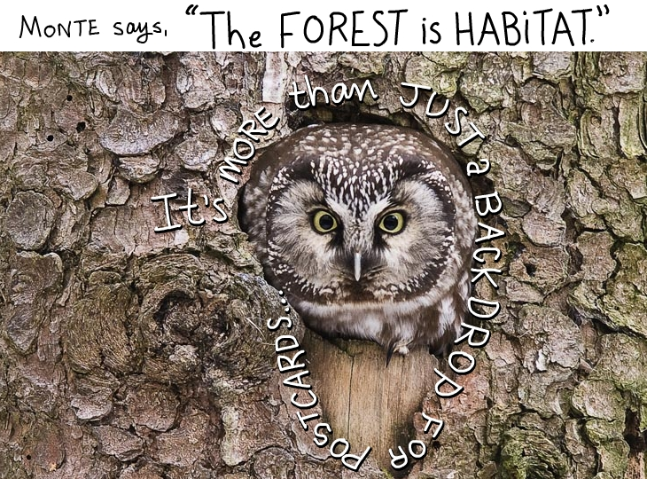 The forest is habitat photo illustration by Franke James with Owl in Tree photo from istockphoto