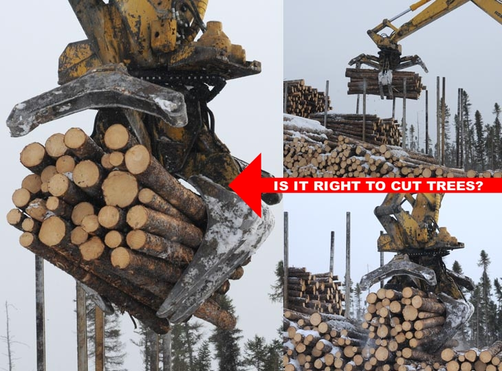 Is it right to cut trees, photo illustration by Franke James