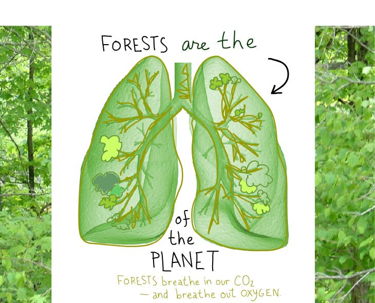 Forests are the lungs of the planet, illustration by Franke James with source illustration from istockphoto