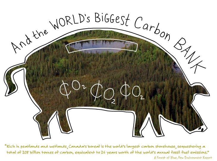 Boreal Forest is biggest carbon storehouse piggy bank illustration by Franke James, features Boreal wetlands photo by Chad Delany, from A Forest of Blue, Pew Environment Group