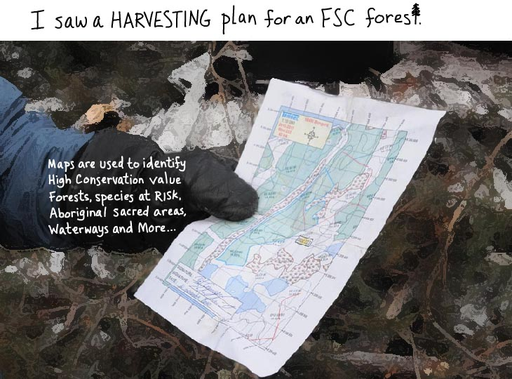 Tembec harvesting plan for an FSC forest, photo by Franke James