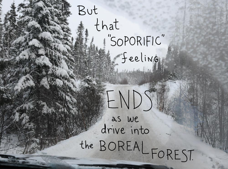 But that soporific feeling ends as we drive into the Boreal Forest, photo illustration by Franke James