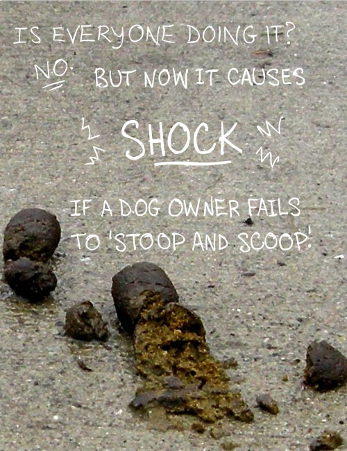poop photo illustration from The Real Poop on Social Change by Franke James;