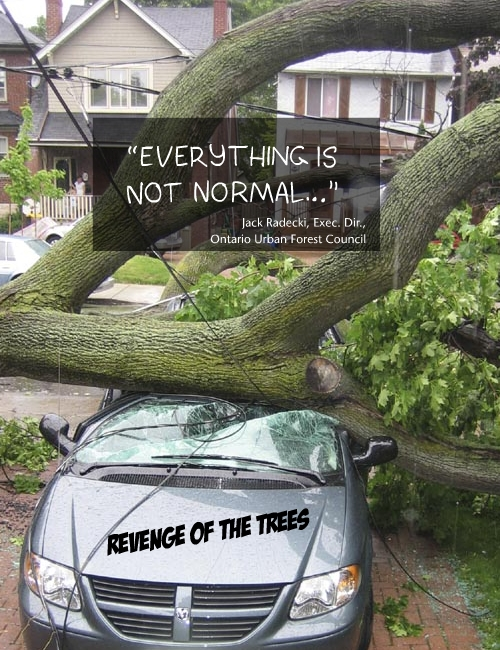 Storm damage in Toronto linked to climate change