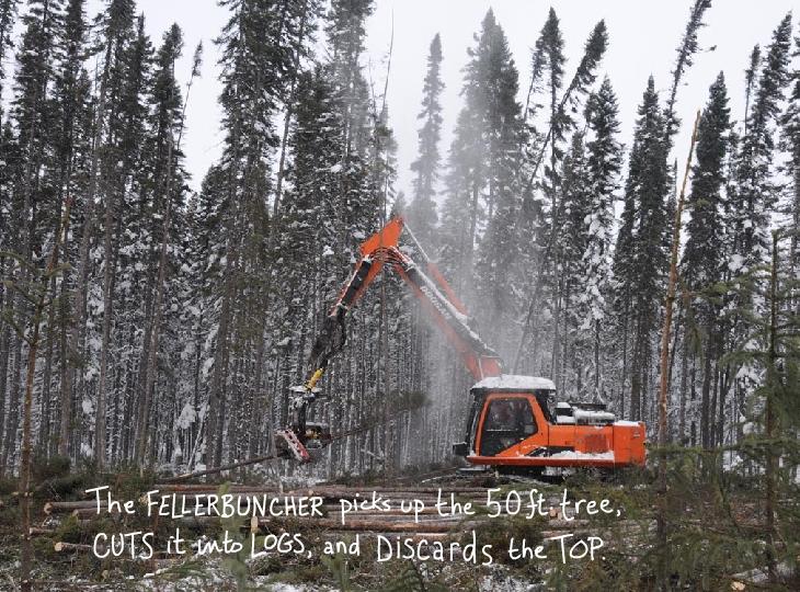The feller buncher picks up the 50 ft tree photo illustration by Franke James
