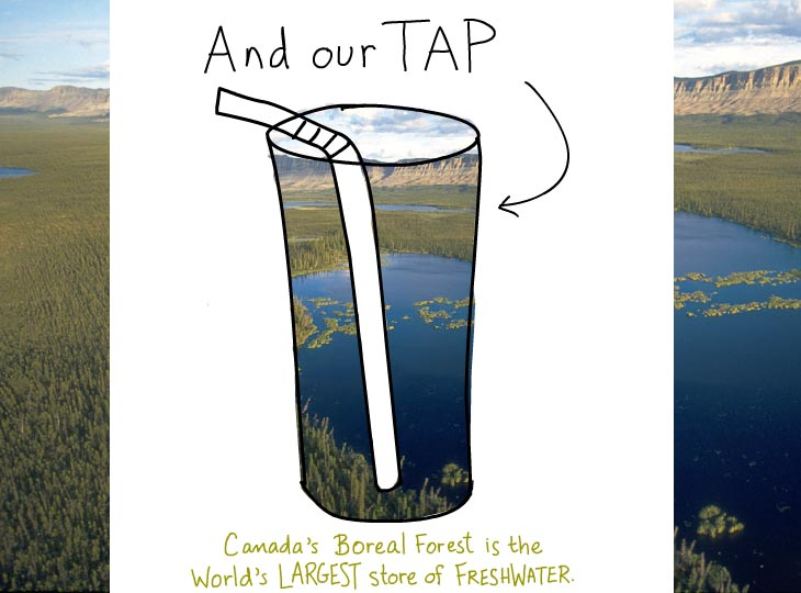 Boreal Forest is our tap, illustration by Franke James, features forest water photo by D. Langhorst, Ducks Unlimited, from A Forest of Blue, Pew Environment Group