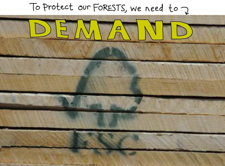 to protect our forest we need to demand FSC photo illustration by Franke James