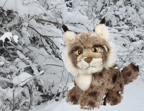 Photo-illustration by Franke James featuring WWF lynx